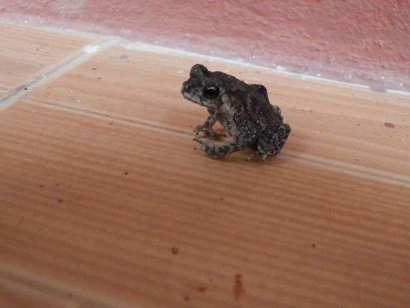 dieser kleine Zeitgenosse hatte sich in unser Zimmer verirrt...wir haben ihm die Freiheit geschenkt und ihn NICHT gegessen !!!!
